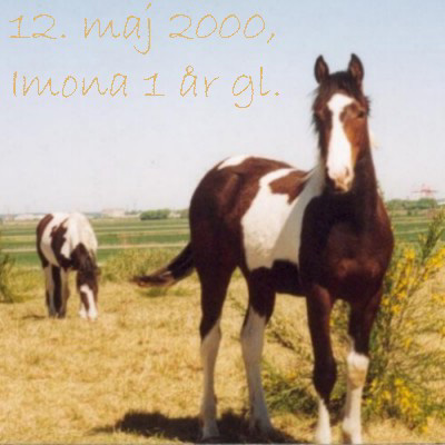 Imona, Filly born May 26th 1999 - click for next photo